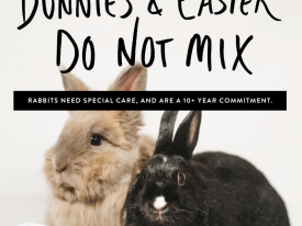 Rabbit Education Campaign